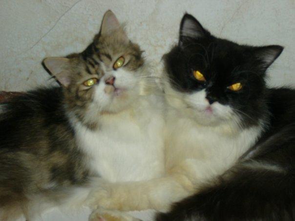 Kucing Belang Tiga Bawa Hoki Hopefulia